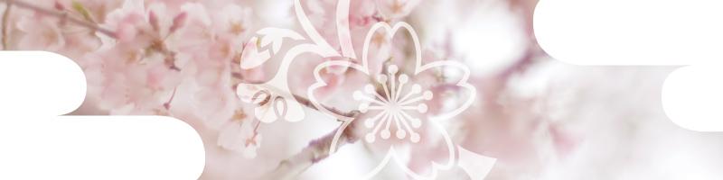 花個紋_3月 桜