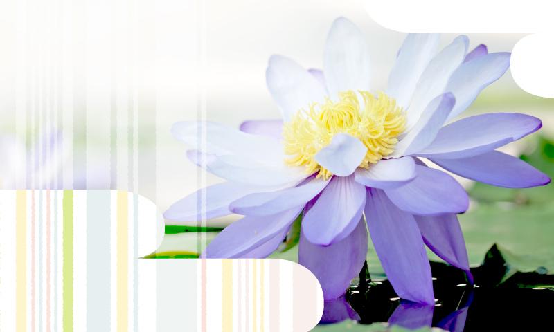 お問い合わせイメージ_蓮の花