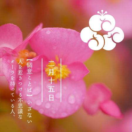 花 紋 日 個 の 366