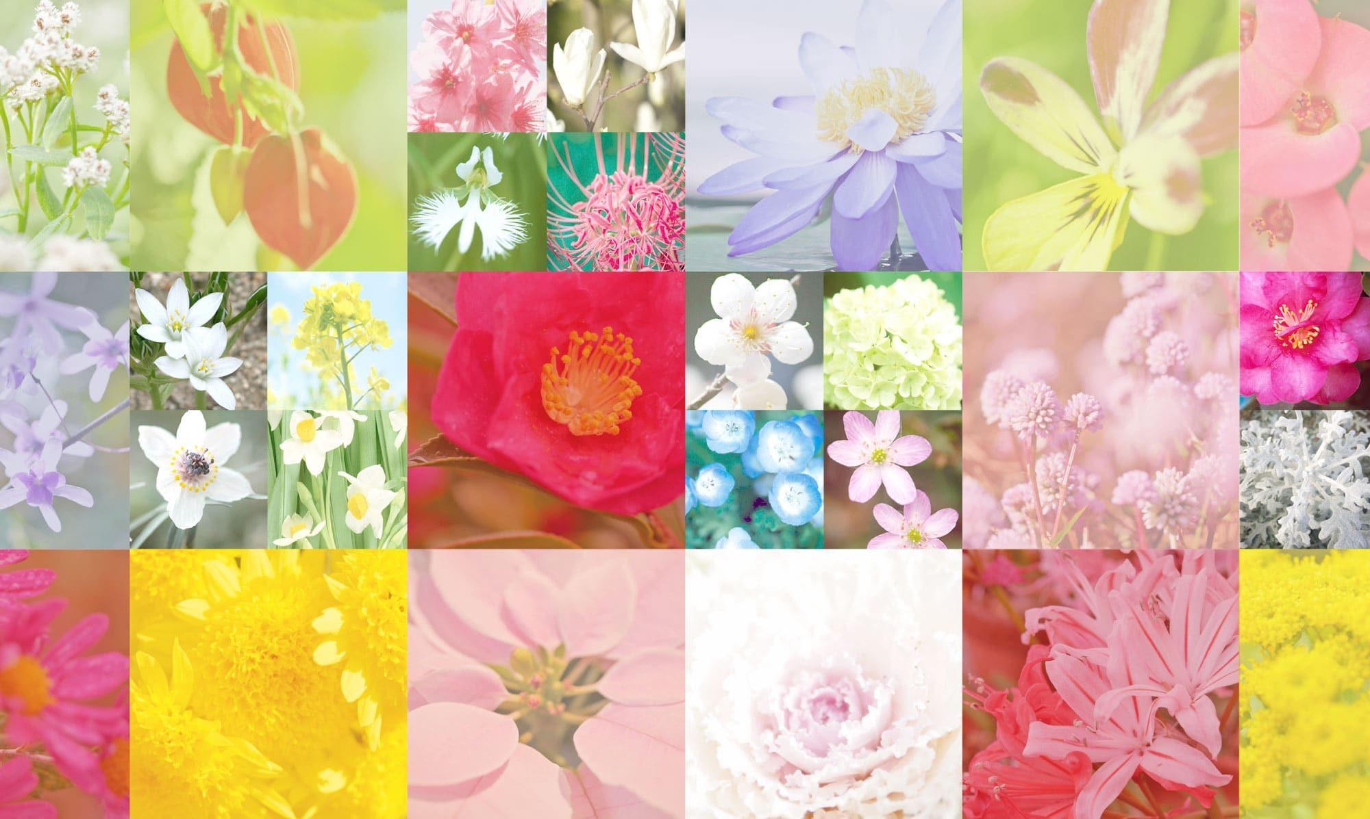 花個紋を花から探す